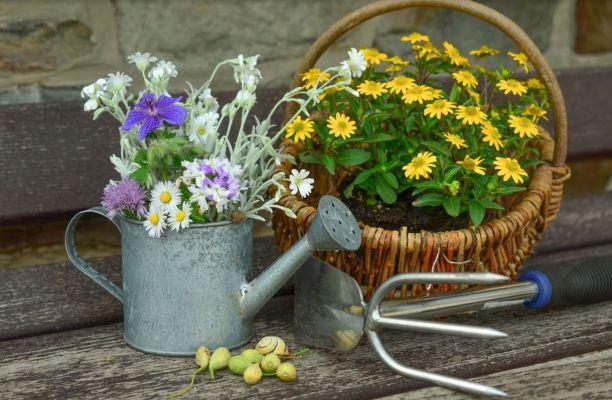 Kwiaty imateriał szkółkarski