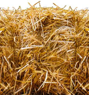 słoma na pniu 1 ha pszenica