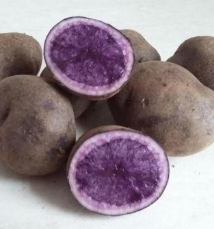 Ziemniak Truflowy