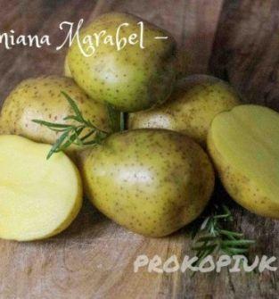Ziemniaki różny kaliber - odmiana Marabel