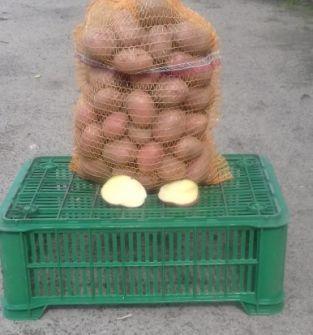 Ziemniaki Irga, Irys, Katania, Arrow