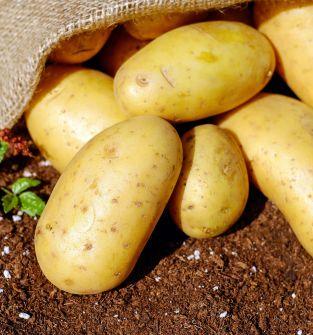 Ziemniaki Sifra