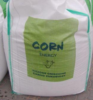 Zakiszone ziarno kukurydzy ze śrutą rzepakową