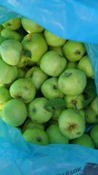 Jabłka antanowka