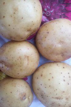 Młode ziemniaki Sifra !!!