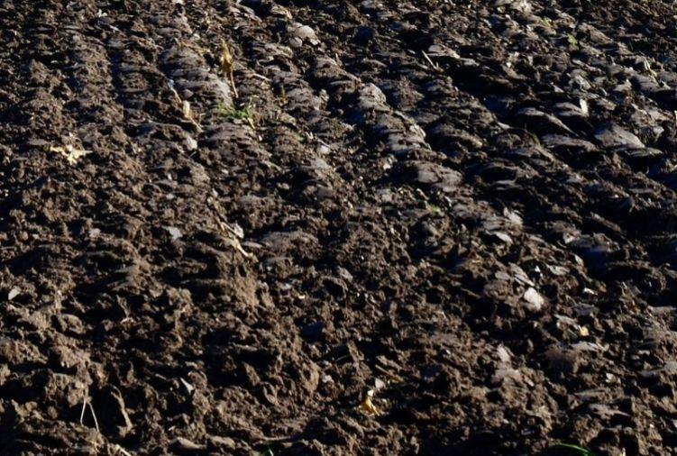 grunt w dzierżawę