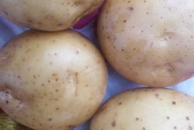 Ziemniaki SIFRA po centrali