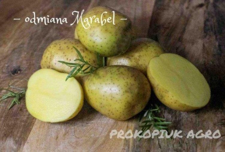 Ziemniaki do sadzenia na wiosnę - odmiana Marabel