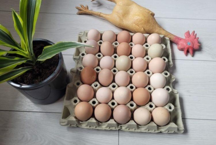 Jajka wiejskie od szczęśliwych kurek